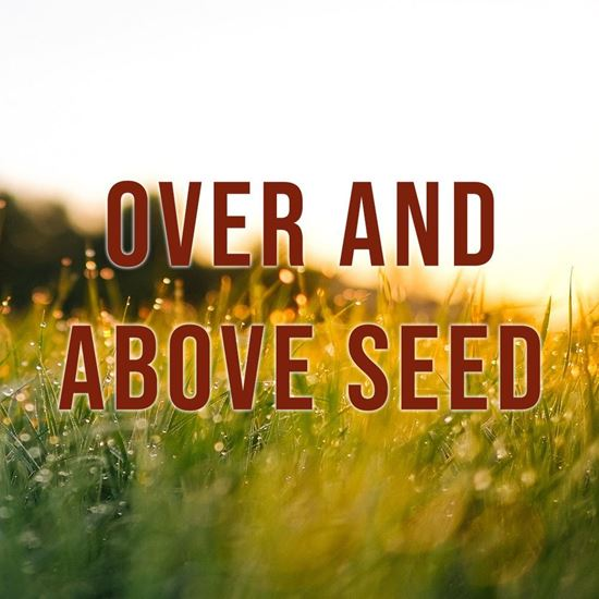 Picture of Giving - Over and Above Seed